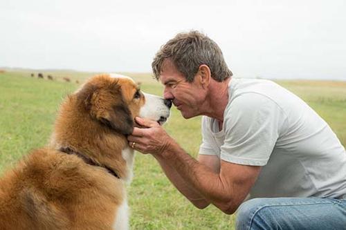 《一条狗的使命》主角贝利的自述台词